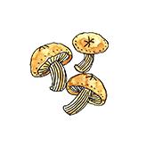 原木栽培椎茸